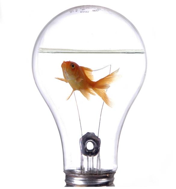 Innovación en la busqueda de oportunidades