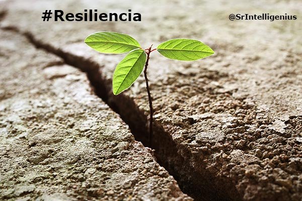La resiliencia emprender desde la adversidad